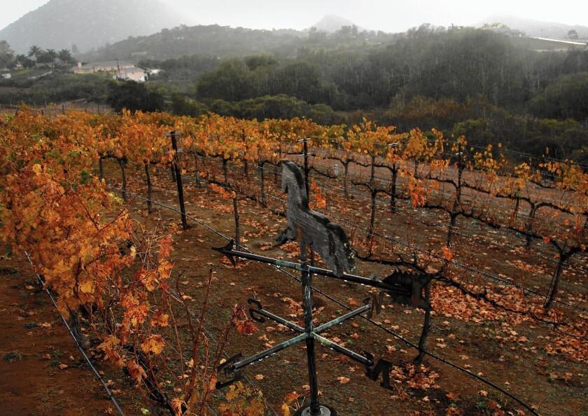 San Diego County winery law
