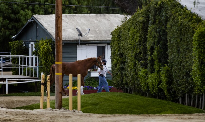 A racehorse is led back to its stable Saturday at Santa Anita Park, where horse racing has been shut down but life around the backstretch goes on during the COVID-19 pandemic.