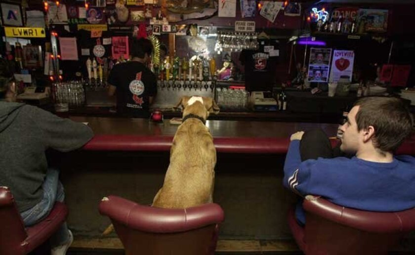 California's 4 a.m. last call is not coming to San Diego. Here's a photo of a dog inside Live Wire bar in North Park.