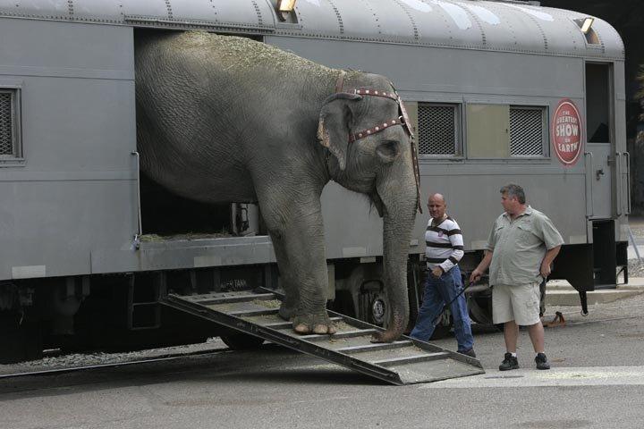 Circus animals walk to Sports Arena