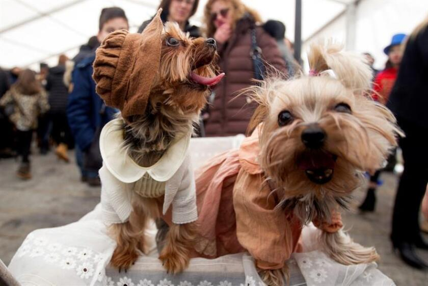 Las enfermedades e infecciones parasitarias transmitidas a los humanos por sus mascotas -condición conocida como zoonosis- aumentan durante la primavera y el verano debido a las condiciones climáticas y mala higiene, dijo a Efe la doctora Ylenia Márquez. EFE/Archivo