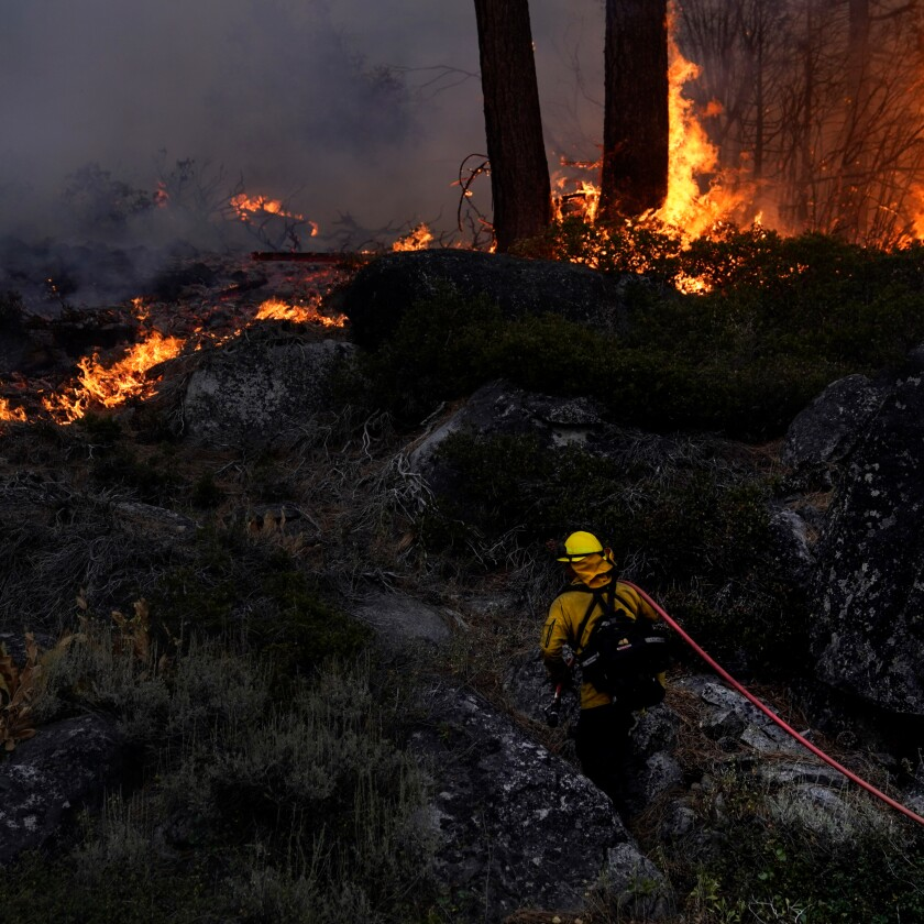 A firefighter combats flames in a forest.