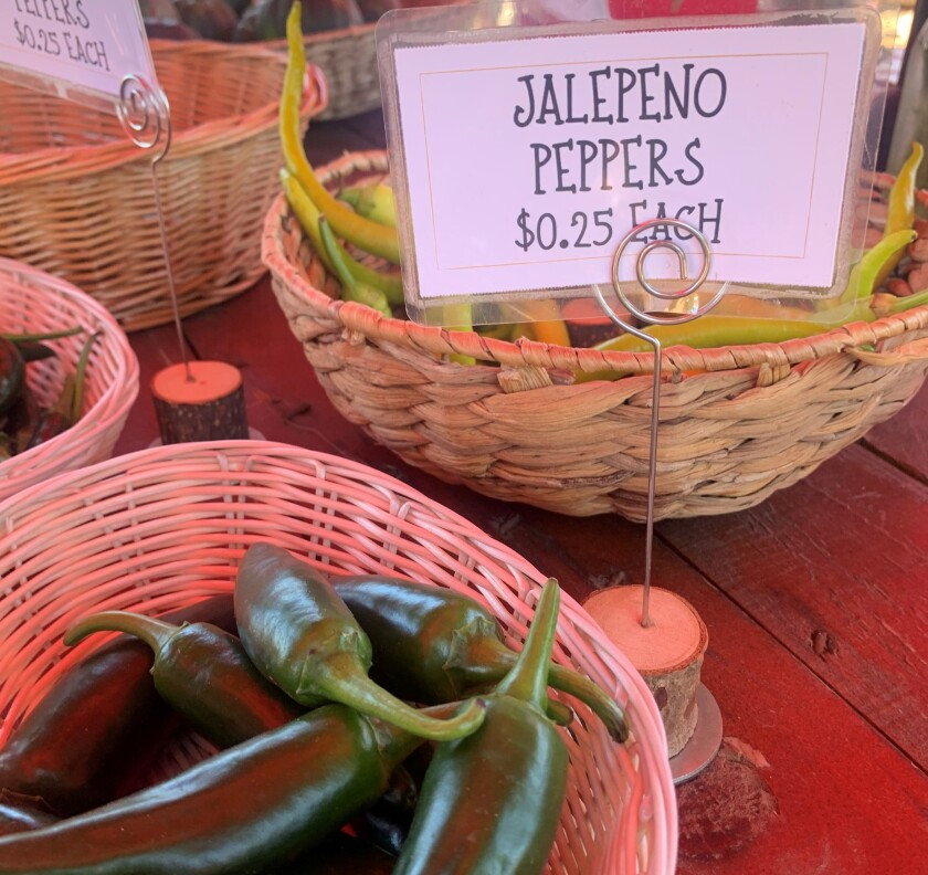 Jalapeno peppers in baskets for sale at a farm stand