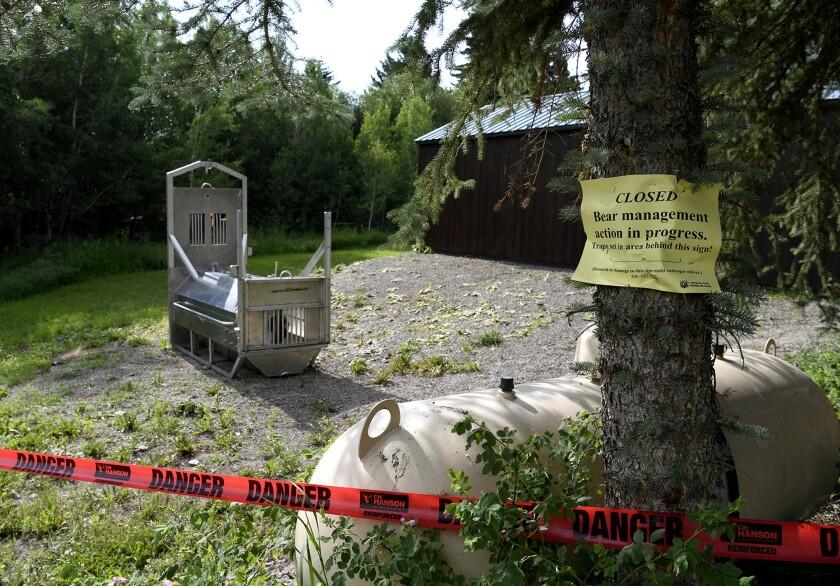 A bear trap set by Montana officials.