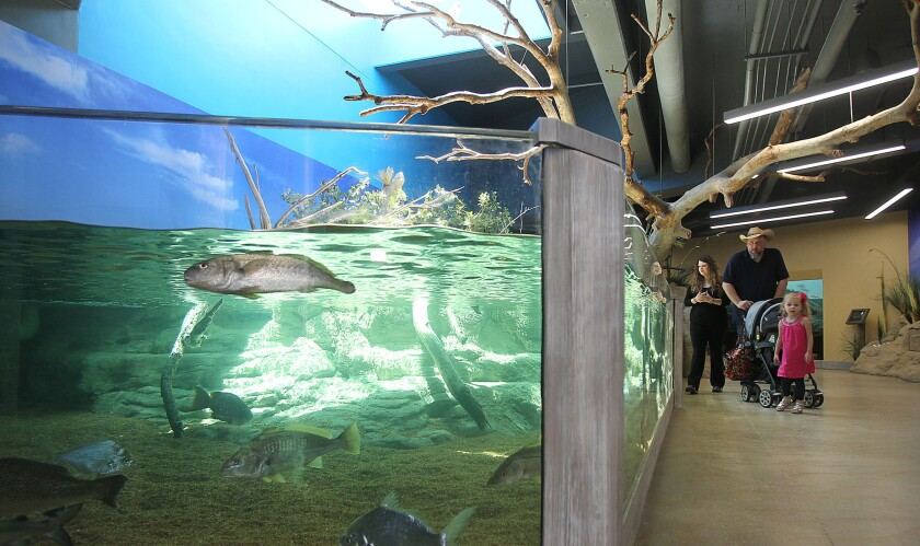 Visitors look at the Nearshore exhibit at the Texas State Aquarium in Corpus Christi on April 9, 2014, during the exhibit's grand opening.