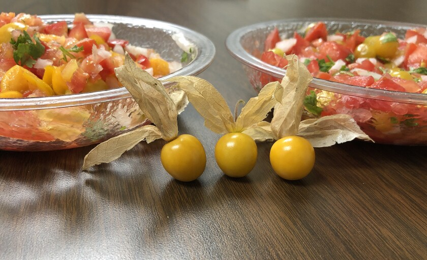 Goldenberries and their close cousins ground cherries are tasty, tangy and easy to grow, so why don't they have a bigger place in our gardens?