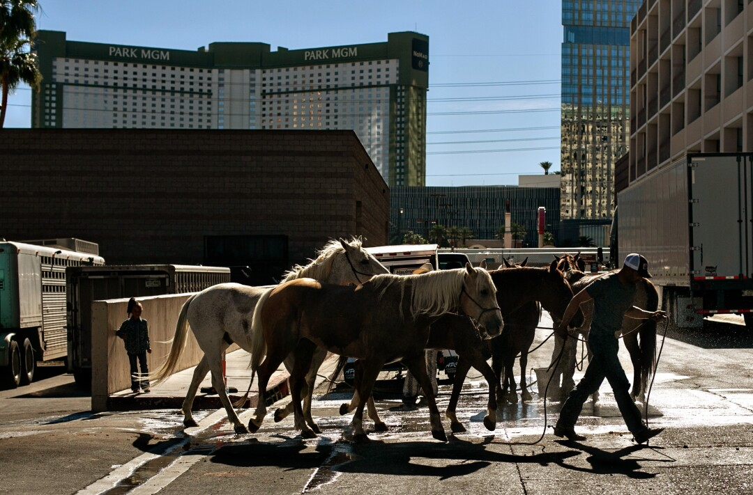 Horses are hosed down for relief from the heat in the street outside the arena