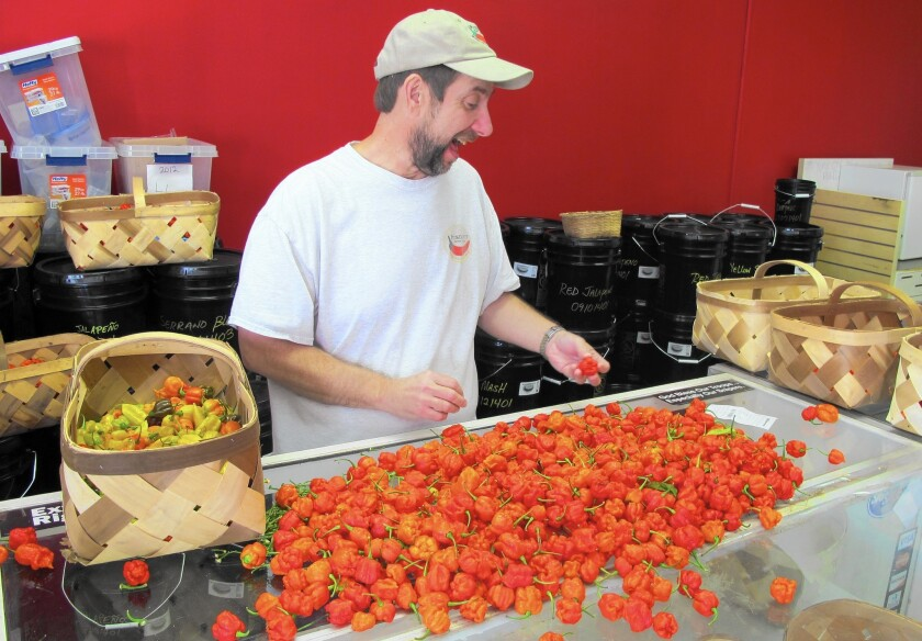 Ed Currie sorts Carolina Reaper chile peppers at his company in Fort Mill, S.C.