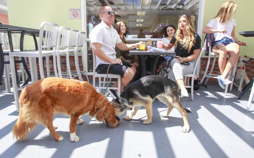 Kiké, a toller retriever, left, and Rosie, a German Shepard, enjoy the Blue Buffalo Kibble dish with bone broth gravy and rice, at The Compass restaurant in Carlsbad Village on Tuesday.