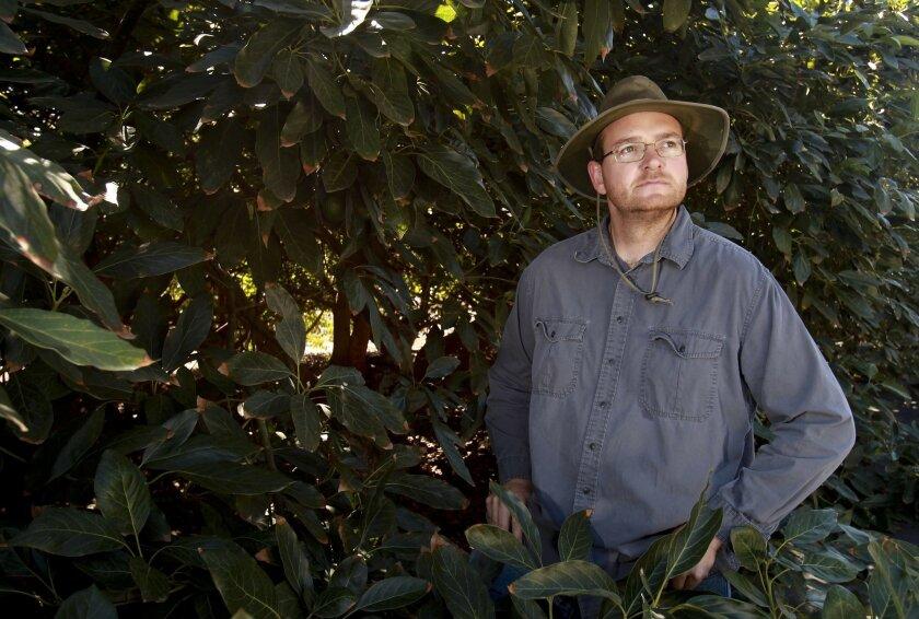 Ben Holtz, an Escondido avocado farmer on some of his 70 acres north of Escondido.