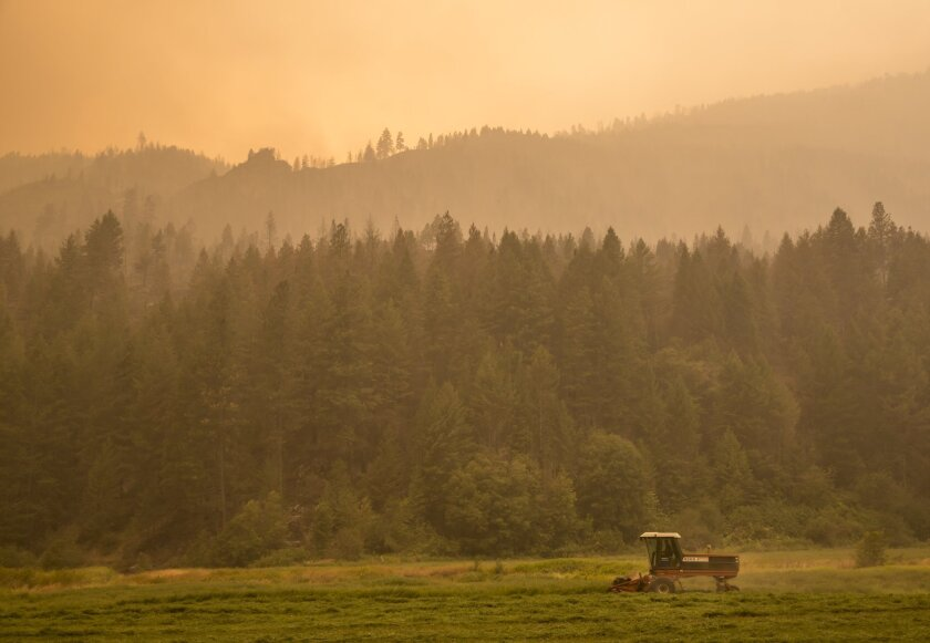 A farmer near Omak, Wash., mows alfalfa on Aug. 23 as smoke from the Okanagon Complex wildfires turns the air hazy.