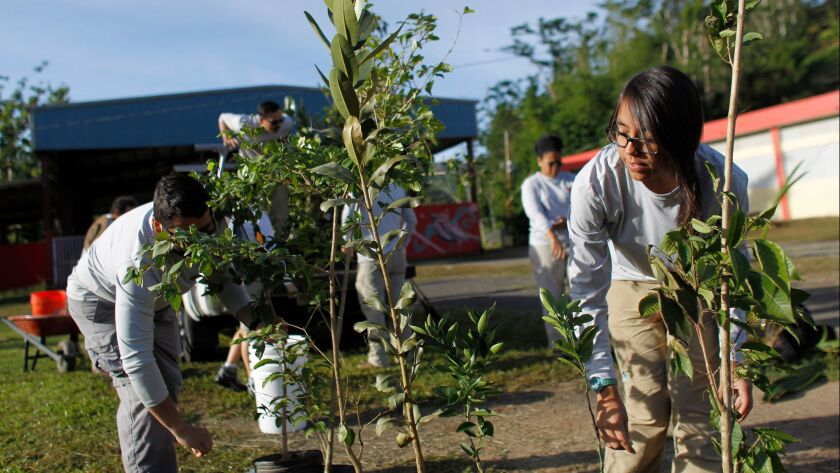 Workers for Para la Naturaleza, an initiative of the Conservation Trust of Puerto Rico, help to plant native trees in the island's Cialitos community that was hard hit by Hurricane Maria.