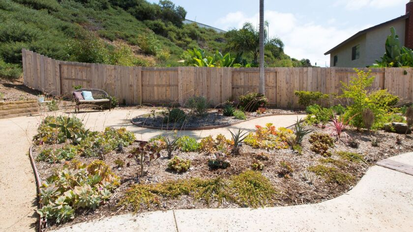 Succulents are the focus of the Lowes' revamped backyard.