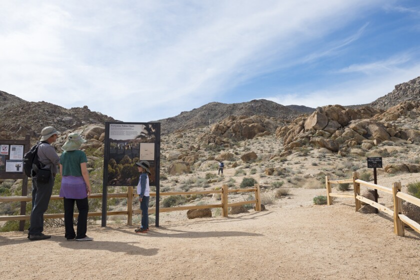 Hiking in Joshua Tree National Park