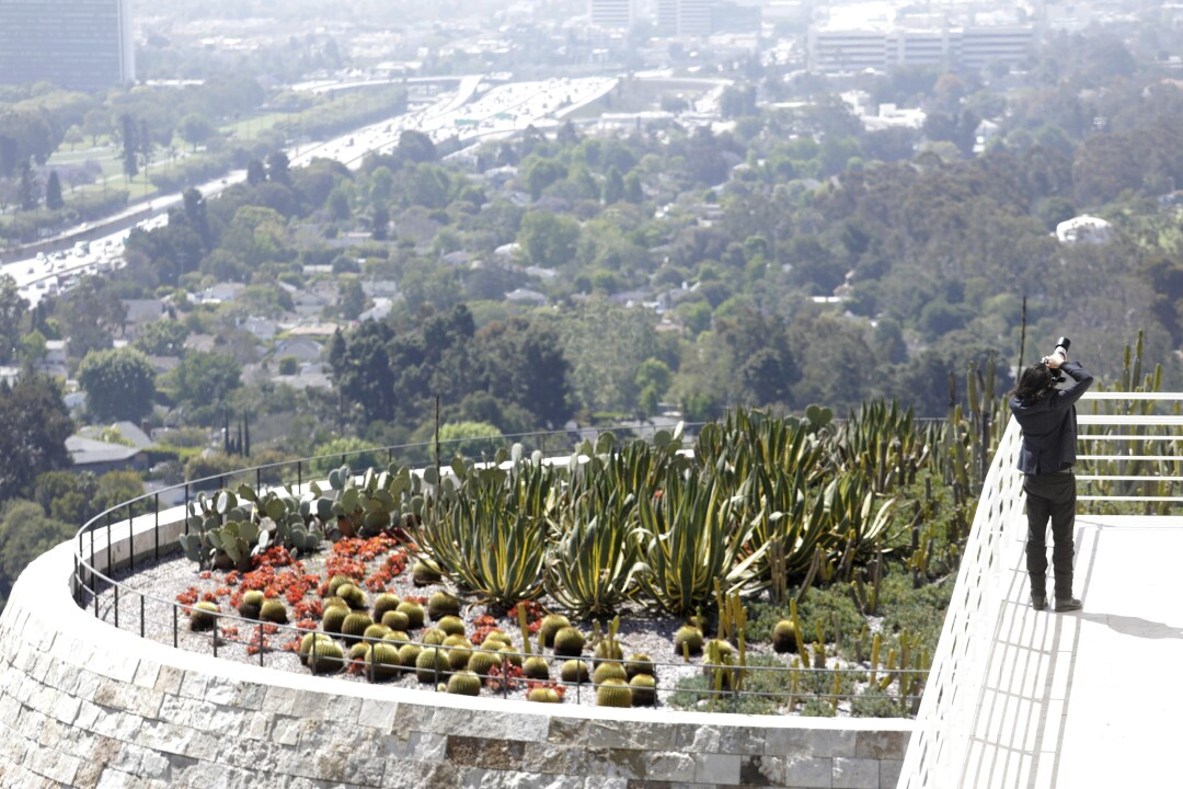 A visitor takes a picture next to the Cactus Gardens while visiting The Getty Center.