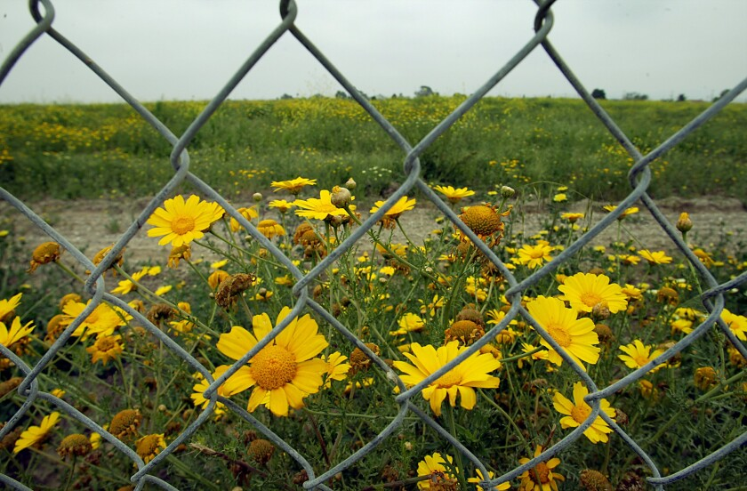 A chain link fence surrounds the old Carson landfill where the National Football League is considering constructing a stadium.