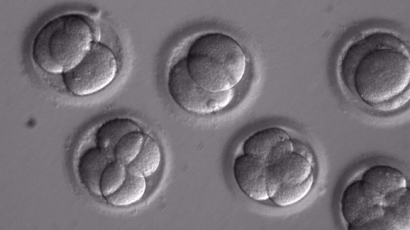 This image shows individual blastomeres within the early embryos two days after co-injection. As a r