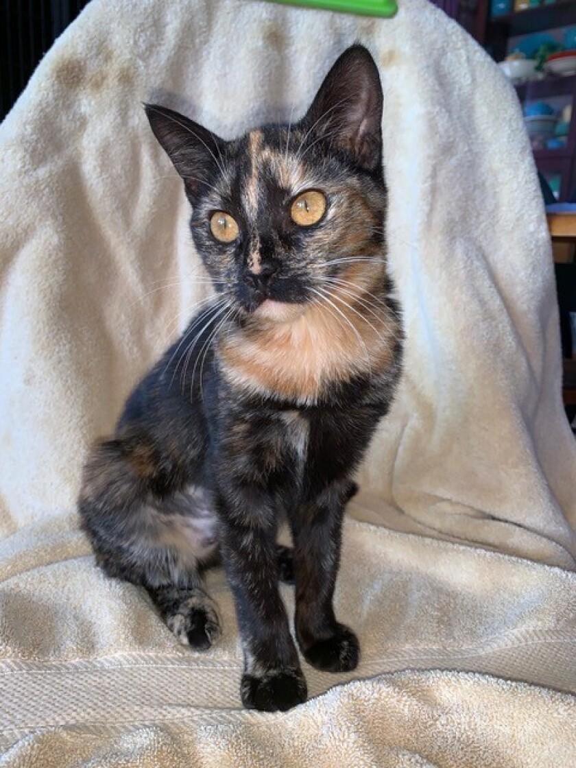 willow kitty.jpg