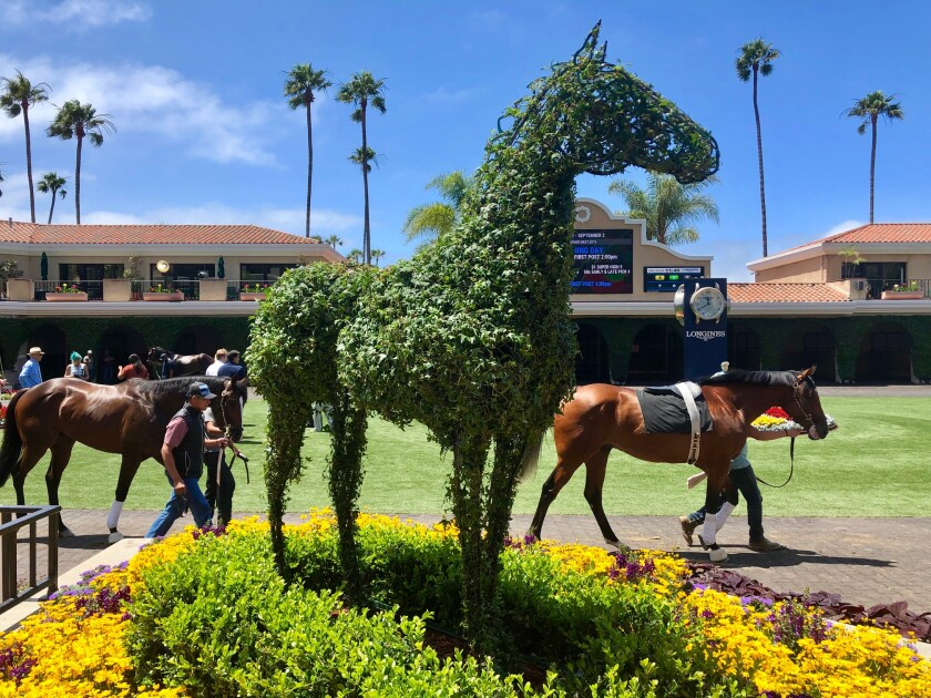 This is one of two horse topiaries by Jennifer Coburn, of Elfin Forest, that were added to the Del Mar racetrack grounds this season.