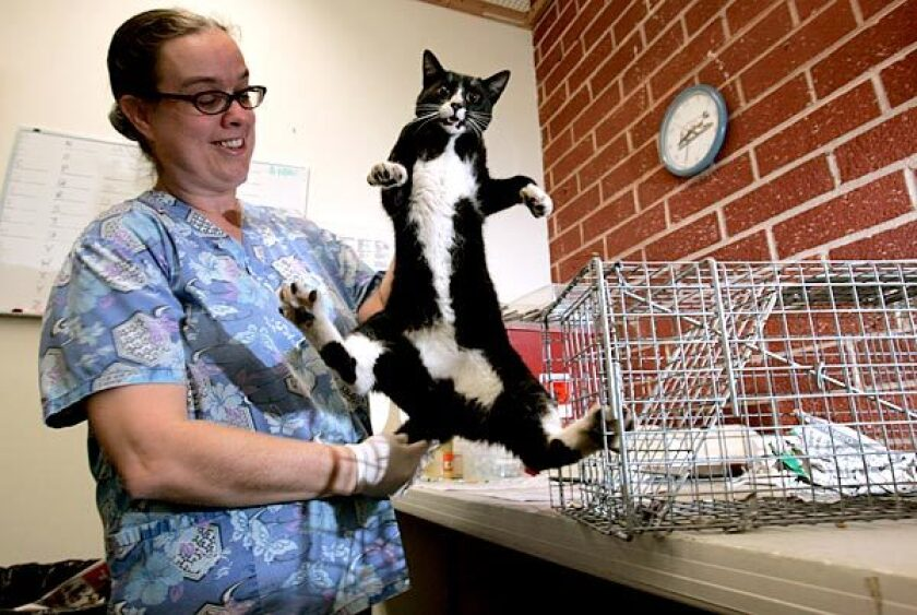 Jennifer Andelin of FixNaion removes a cat, under anesthesia, for neutering.