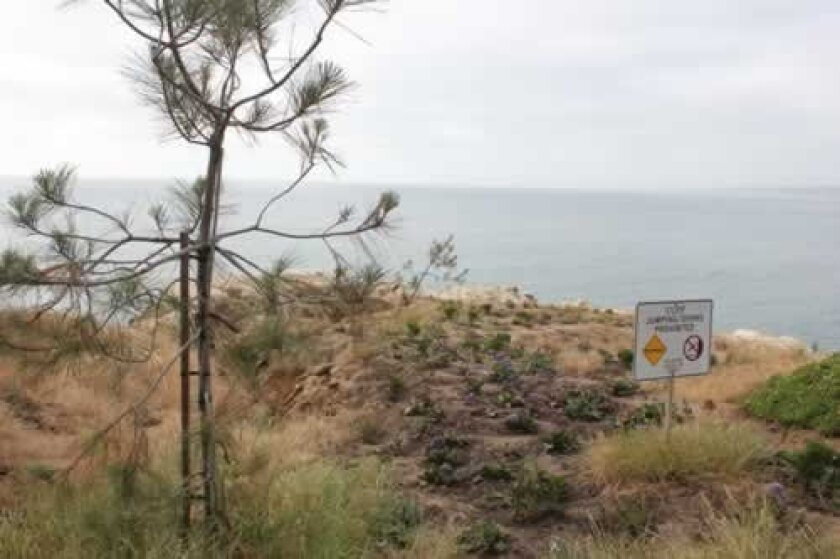 Jim allen said he planted two torrey pines and other native plants atop a city bluff near his cave store to slow erosion and keep the public off the cliff. Pat Sherman