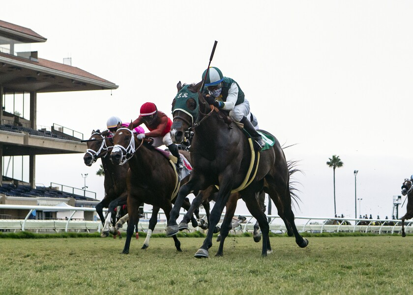 Race horses on the turf at the Del Mar Fairgrounds