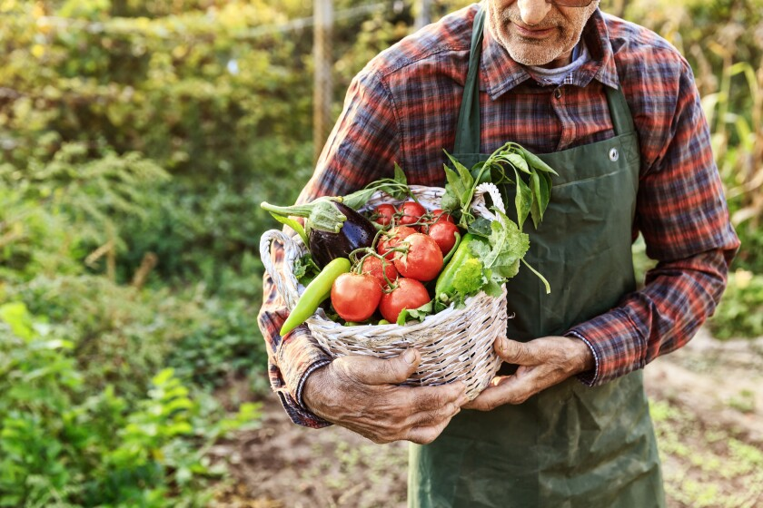 Man carrying a basket of freshly picked produce from the garden.