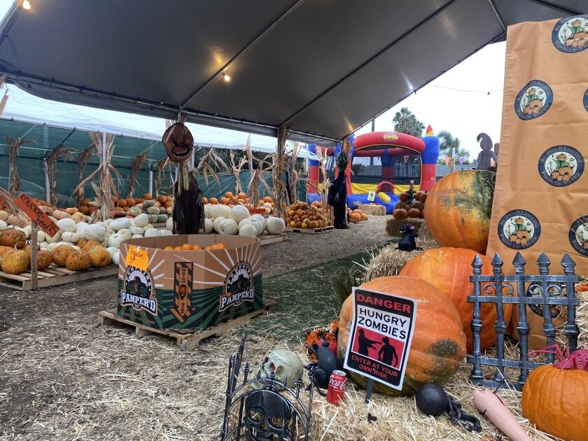 The Mr. Jack O'Lanterns Pumpkin Patch is open at 6710 La Jolla Blvd. through Sunday, Oct. 31.