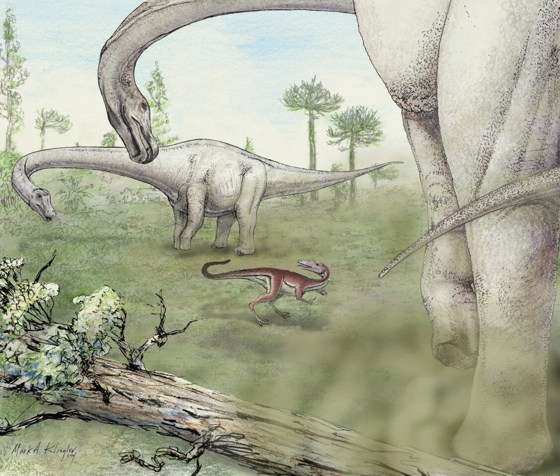 An artist's depiction of two Dreadnoughtus schrani menacing a much smaller meat-eating dinosaur.