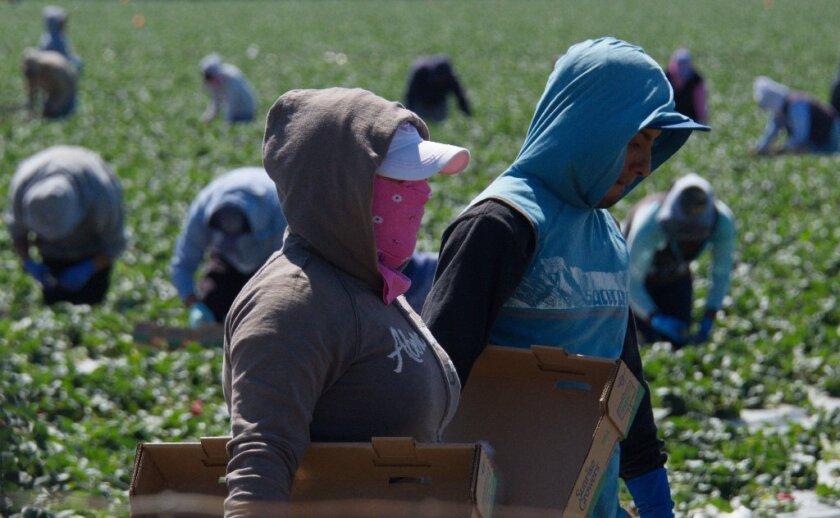 Aunque las organizaciones no tienen un número específico de cuánta gente está expuesta a estos pesticidas, notaron que actualmente hay alrededor de 2 millones de trabajadores del campo en Estados Unidos.