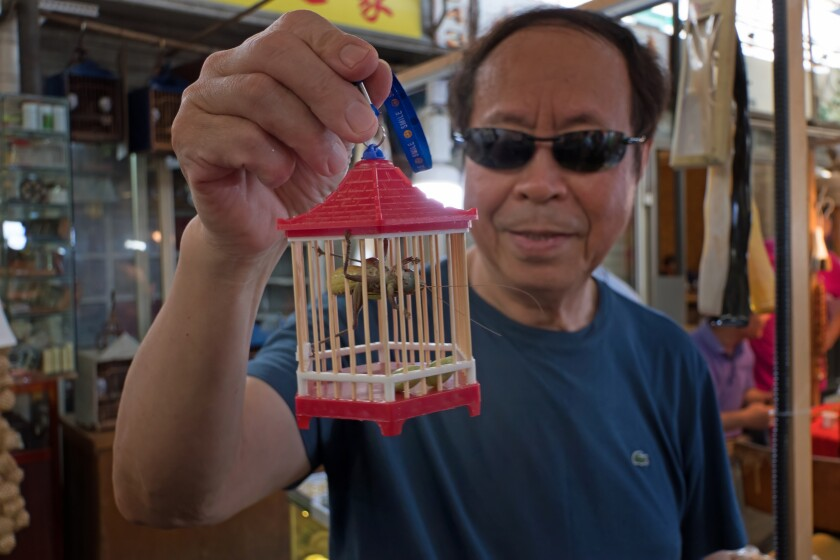 Chinese Man Holding A Cage with Cricket Sold as A Pet in A Traditional Market of Shanghai. China. Asia. Asian Shop Selling Animals. Wildlife. Exotic Insects