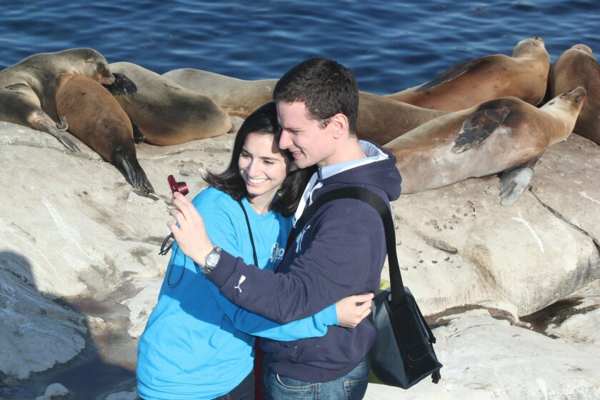 A couple reviews their 'selfie,' taken just feet from a backdrop of sunning sea lions at La Jolla Cove.
