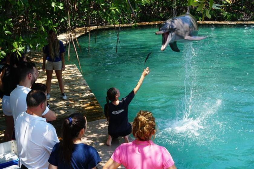Jóvenes invidentes de la asociación Lighthouse for the Blind de Miami juegan con un delfín hoy, miércoles 25 de julio de 2018, durante una visita al Acuario de Miami, en Florida (EE.UU.). EFE