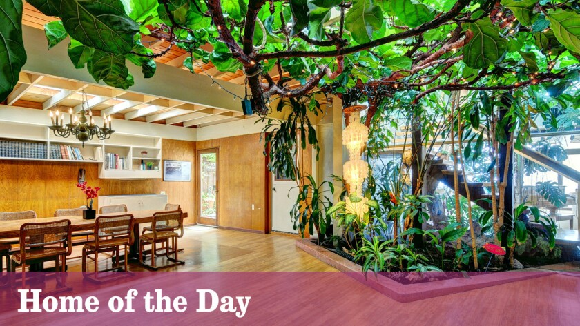 Home of the Day: There's a tree growing inside this Carbon Beach home