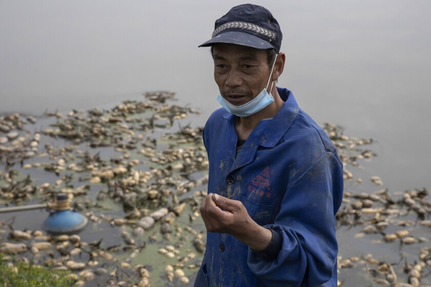 Farmer Jiang Yuewu talks about his crop of lotus roots