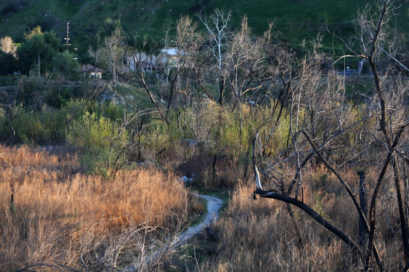 The ponds at the wildlife sanctuary near Sunland-Tujunga coexist on the urban edge.