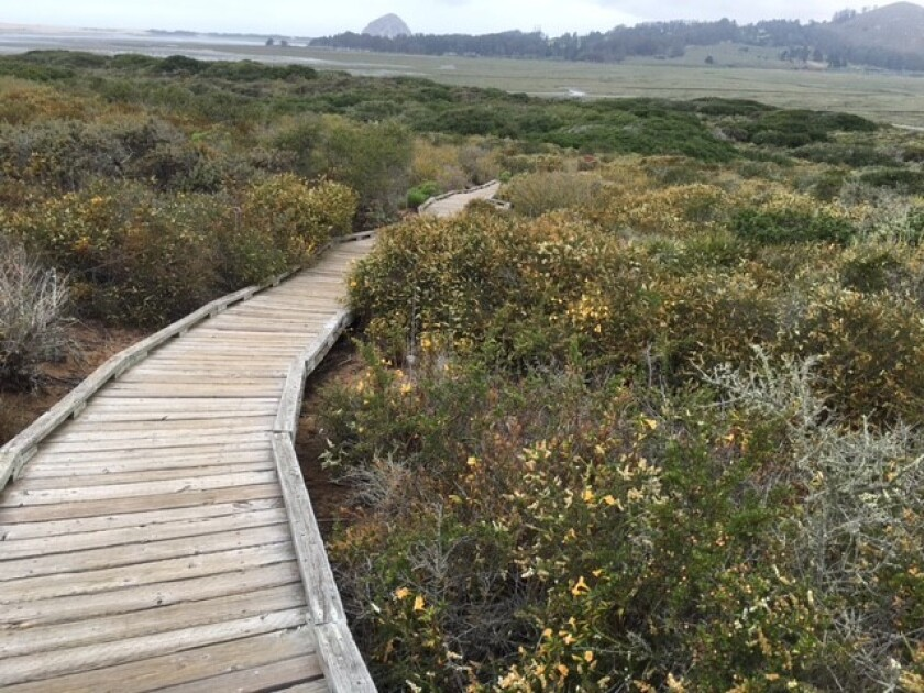 Take a break on your road trip with a stop at El Moro Elfin Forest Natural Area in Los Osos, Calif.