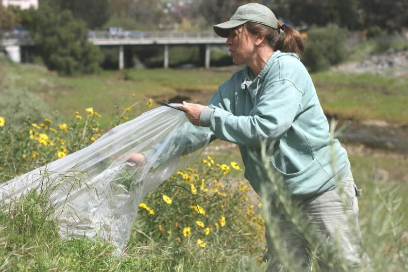 Karin Zirk, founder of Friends of Rose Creek, waters the native plant garden behind the Rose Creek Cottage.