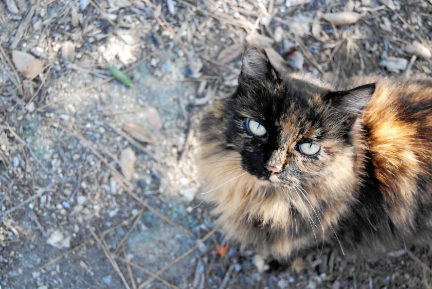 Francisco the cat