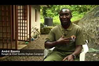 Protecting gorillas and more in Congo's Virunga National Park