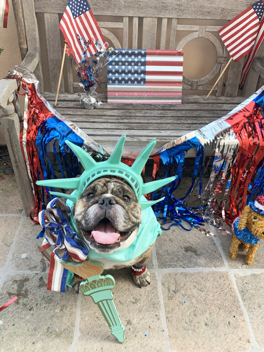 Bentley won the dog category. See more winners in the gallery below.