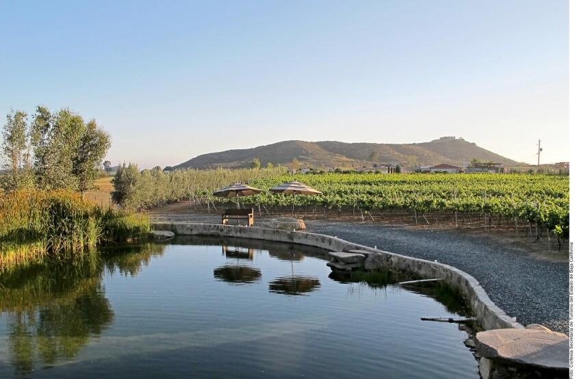 Zona vinícola en Ensenada, Baja California.