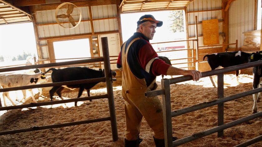 "Swing voter Walter McCormick, 55, who raises cows and makes maple syrup, says, ""People work really hard to make a living as a farmer. There are so many rules. We don't want people from California telling us that we shouldn't dock the tails of our cows."""