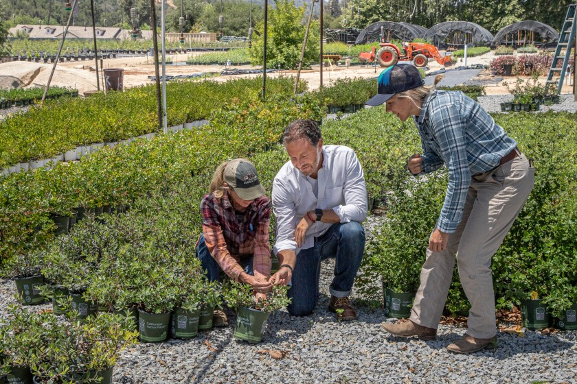 Karen Parke, Jose Cohen and Renee Murphy check on some of the native plants at Moosa Creek Nursery.