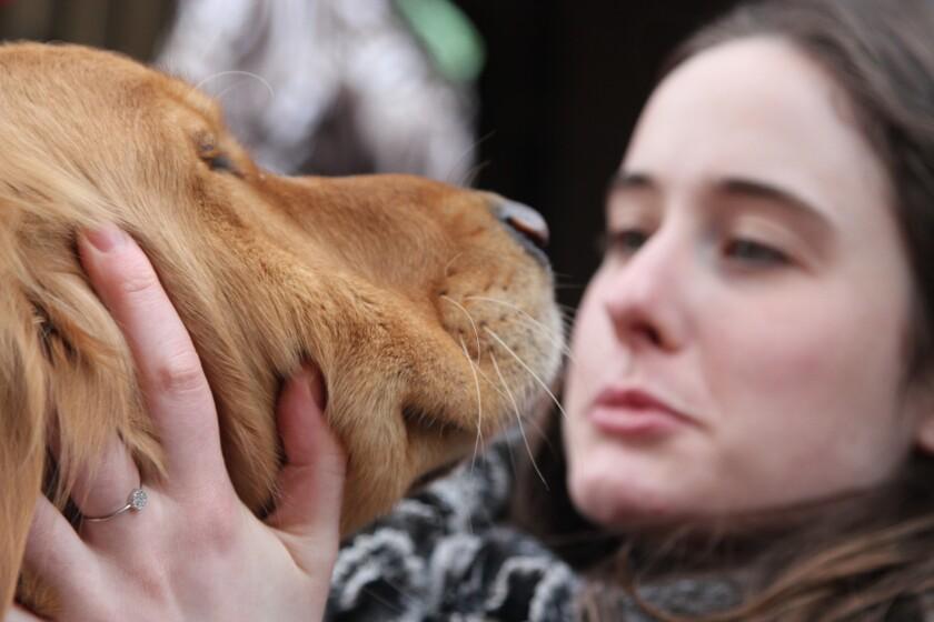 Four comfort dogs visit Boston prior to Marathon