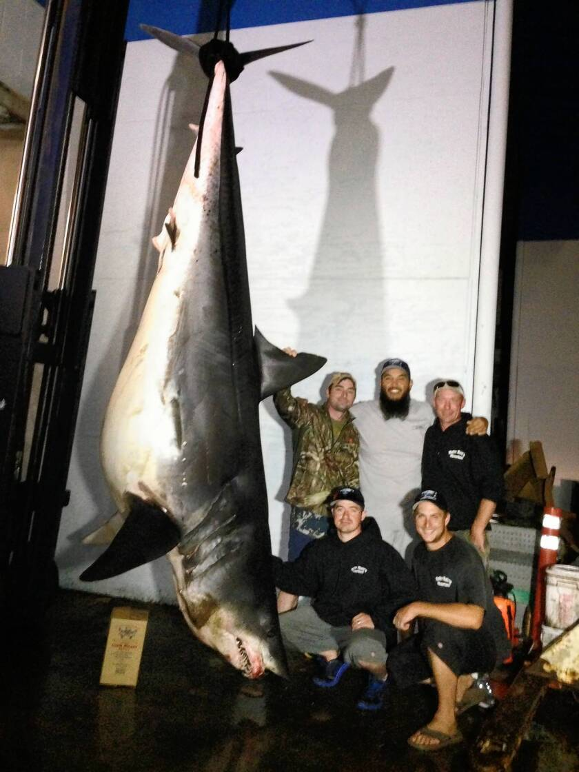 Fisherman and crew that caught 12-foot-long, 1,300-plus-pound short-fin mako shark Monday pose off the coast of Huntington Beach.