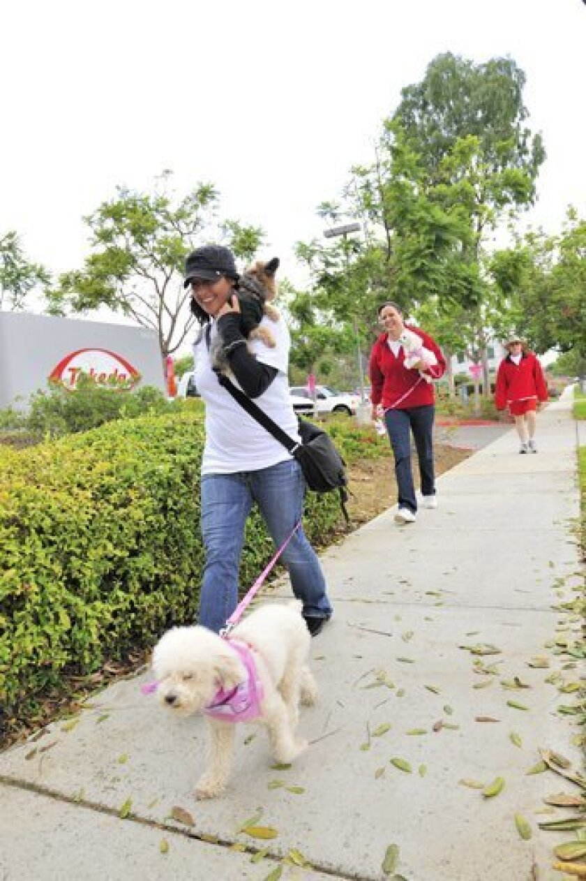 Michelle Marzullo and K-9, Delilah, walk while carrying her dog Samson.