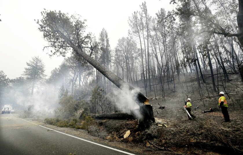 Utility workers Michael Quinliven, second from right, and Clay Loflin watch as a charred ponderosa pine Quinliven cut falls to the ground Monday, Sept. 14, 2015, in Middletown, Calif. Utility crews worked to remove fire-damaged trees that took down power lines and threatened further damage following a wildfire there two days earlier. Two of California's fastest-burning wildfires in decades overtook several Northern California towns, killing at least one person and destroying hundreds of homes and businesses and sending thousands of residents fleeing highways lined with buildings, guardrails and cars still in flames. (AP Photo/Elaine Thompson)
