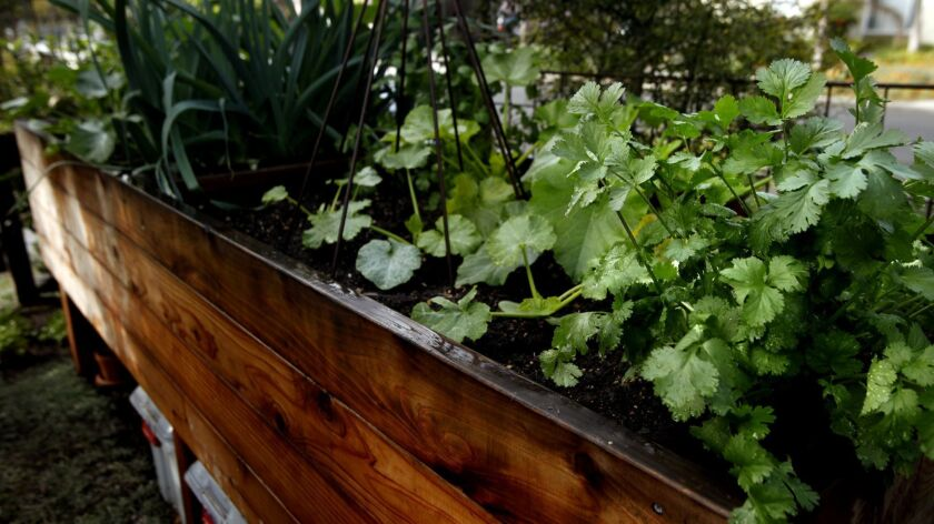 27 tips, tricks and hacks for creating your very first vegetable garden
