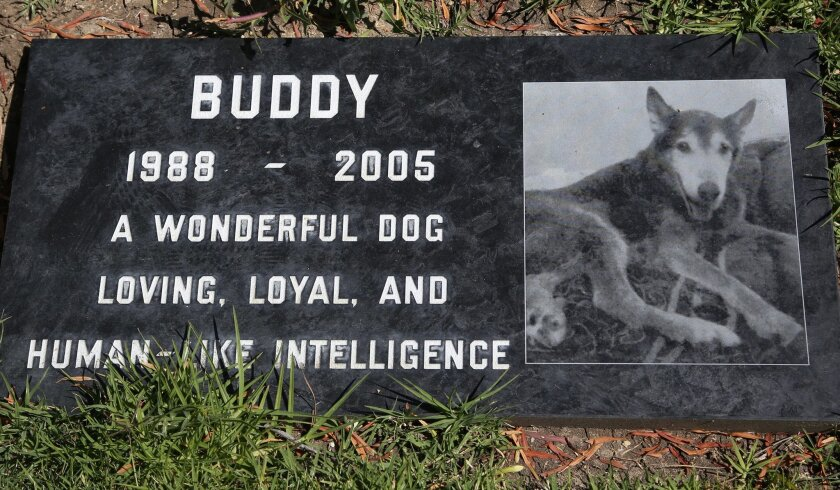 This photo taken on May 12, 2014, shows a grave marker for Buddy a beloved family pet memorialized at the Los Angeles Pet Cemetery in Calabasas, Calif. Saying goodbye to a beloved dog or cat is hard. Despite many options, an estimated 70 percent of owners will leave the body with their veterinarian to dispose of. (AP Photo/Nick Ut)
